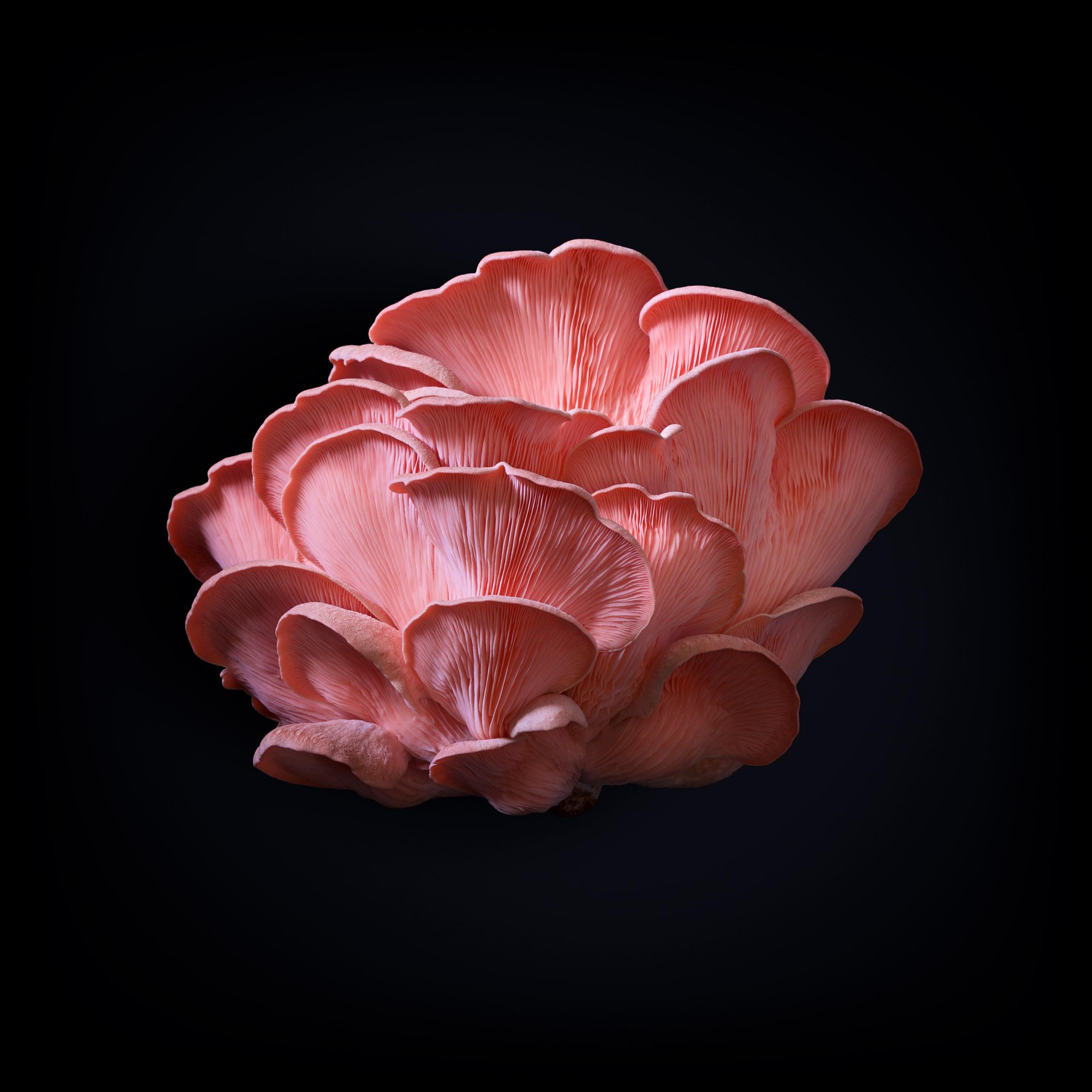 benton-rise-farm-mushroom-01