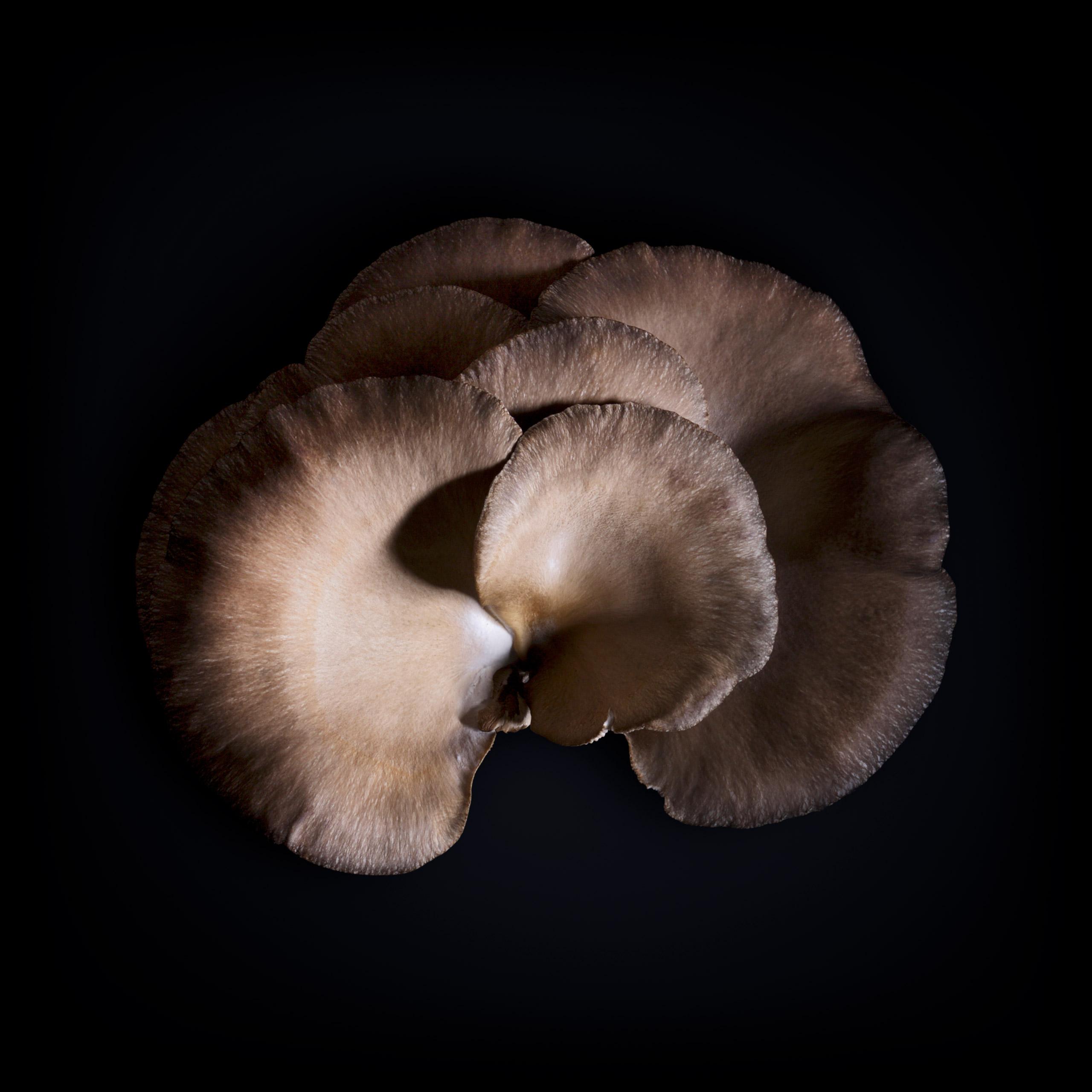 benton-rise-farm-mushroom-06