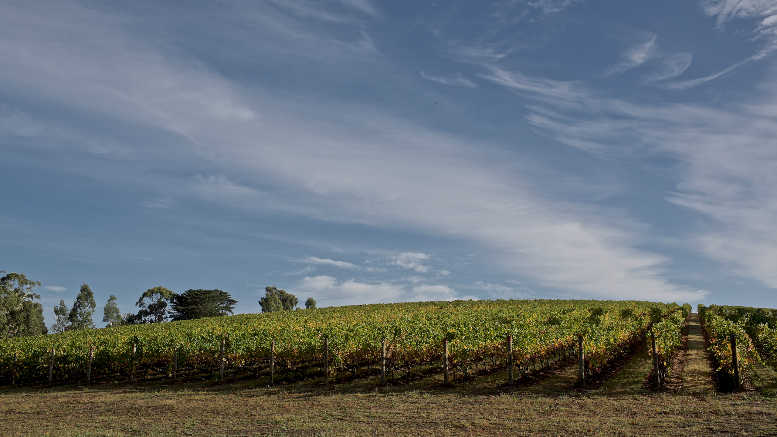 guy-lavoipierre-helens-hill-winery-12